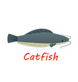cartoon catfish in flat style vector image vector image