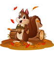 cartoon funny squirrel holding pine cone in the au vector image