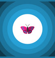 isolated violet wing flat icon archippus vector image vector image