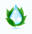 drop of water and green leaves vector image