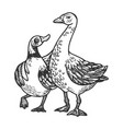 duck and goose friends engraving vector image vector image