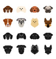 muzzle of different breeds of dogsdog breed vector image