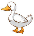cute duck on white background vector image