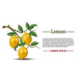 lemons on a branch realistic fruits card vector image vector image