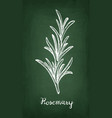 chalk sketch of rosemary vector image