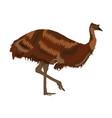 emu bird isolated on white vector image vector image