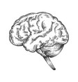 human brain sketch engraving vector image