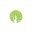 isolated green gradient circular logo tree vector image