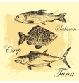 fish sketch drawing - salmon trout carp vector image