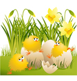 Easter chickens vector image vector image