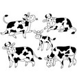 set of cute cartoon cows vector image vector image