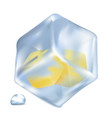 frozen lemon cubes in ice isolated vector image