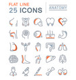Set flat line icons anatomy
