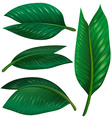 Set of green leaves on white background vector image vector image