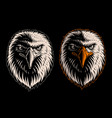 white head eagle vector image vector image