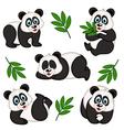 Set isolated panda