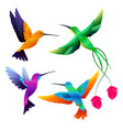 hummingbirds collection exotic tropical little vector image