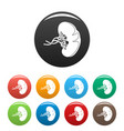 sick spleen icons set color vector image vector image
