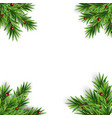 spruce branches fir with berries abstract vector image