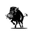 Wild Pig Boar vector image vector image