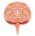 Close up human brain vector image vector image