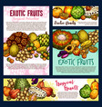 exotic tropical fruitsand berries sketch vector image vector image