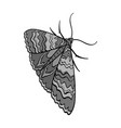 moth night butterfly insect pest moth single vector image vector image