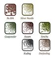 Varieties of tea vector image vector image