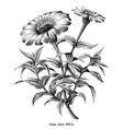 zinnia flower botanical vintage black and white vector image vector image