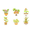 blooming potted plants set beautiful plants and vector image vector image