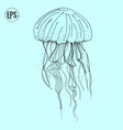 hand drawn jellyfish sea marine animal vector image vector image