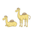 set camels vector image vector image