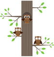 three owls vector image vector image