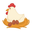 big hen sits on straw nest with eggs vector image