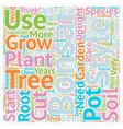 Bonsai Trees Plants and Shops text background vector image