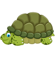 cute turtle cartoon walking vector image