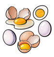 whole and cracked broken shell chicken egg vector image