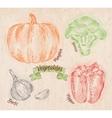 Vegetables pepper pumpkin garlic broccoli country vector image
