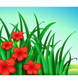 A garden of red flowers vector image vector image