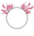Branches with pink flowers and buds cherry vector image vector image