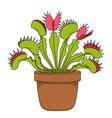 color image of venus flytrap vector image vector image