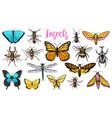 different insects set butterfly and dragonfly vector image