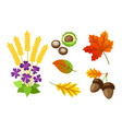 autumn floral elements chestnut isolated vector image