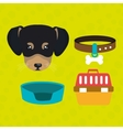 dog plate collar vector image vector image