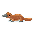 platypus on a white background vector image