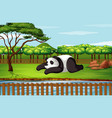 scene with panda in garden vector image vector image