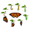 life cycle of butterfly realistic set vector image