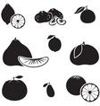 Citrus fruit vector image