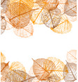 frame autumn leaves vector image vector image