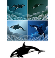 Killer whale set vector | Price: 3 Credits (USD $3)